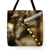 Pacific Spiketail Dragonfly On Mt Tamalpais 2 Tote Bag