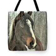 Paint Horse In Winter Tote Bag