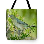 Painted Bunting Hen Tote Bag