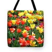 Painted Sunlit Tulips Tote Bag