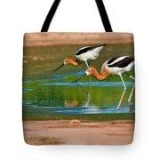Pair Of American Avocets Tote Bag