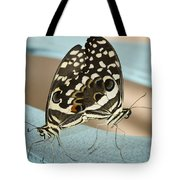 Pair Of Citrus Swallowtail Butterflies  Tote Bag