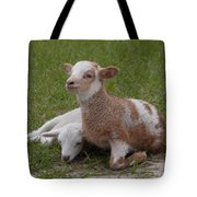 Pair Of Lambs Tote Bag