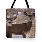 Pair Of Mule Deer   #7584 Tote Bag