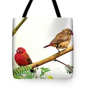 Pair Of Red-billed Firefinches Tote Bag
