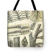 Paleozoic Flora, Calamites, Illustration Tote Bag