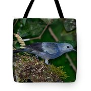 Palm Tanager Tote Bag