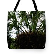 Palm Tree In Curacao Tote Bag