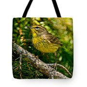 Palm Warbler Pictures 38 Tote Bag