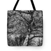 Palo Verde In Black And White Tote Bag