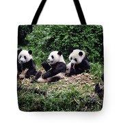 Pandas In China Tote Bag