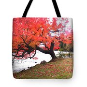 Panorama Of Red Maple Tree, Muskoka Tote Bag by Henry Lin