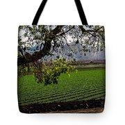 Panoramic Of Winter Lettuce Tote Bag by Robert Bales
