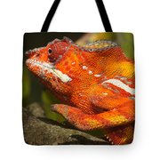 panther chameleon from Madagascar 3 Tote Bag