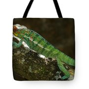 panther chameleon from Madagascar 5 Tote Bag