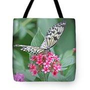 Paper Kite Butterfly 2 Photograph By Kim Hojnacki