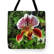 Paph Fiordland Sunset Orchid Tote Bag