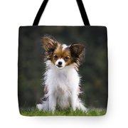 Papillon Dog Tote Bag