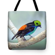 Paradise Tanager Tote Bag