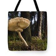 Parasol Mushrooms Pair In Forest Spain Tote Bag