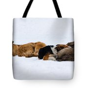 Pariah Dogs On The Snow - Featured 2 Tote Bag