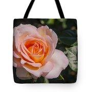 Parnell Pink Rose Tote Bag