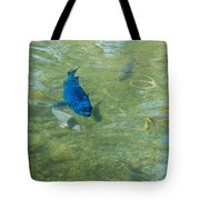 Parrotfish On A Swim Tote Bag by John M Bailey