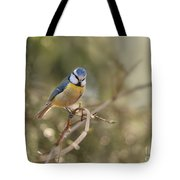 Parus Sitting On A Thin Branch Tote Bag