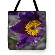 Pasque Flower Tote Bag