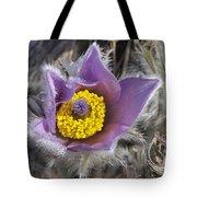 Pasque Flower Pulsatilla Halleri Tote Bag