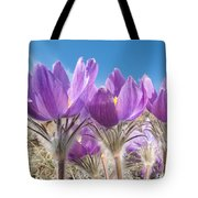 Pasque Flowers Close-up In Natural Environment Tote Bag