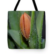 Pastel Tulips Buds Tote Bag
