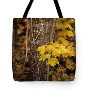 Patterns Of Fall Tote Bag