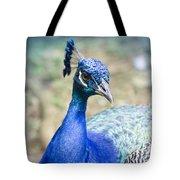 Pavo Cristatus II Indian Blue Peacock Tote Bag