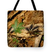 Peaceful Shadow In The Woods Tote Bag