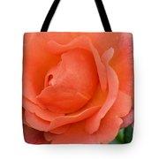 Peach Faced Rose Tote Bag