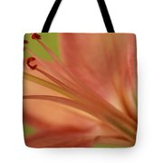 Peach Lily 1 Tote Bag