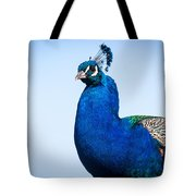 Peacock 1 Tote Bag