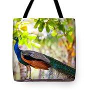 Peacock. Bird Of Paradise Tote Bag