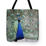 Peacock Fanning Tote Bag