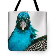 Peacock Front View Tote Bag