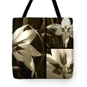 Peacock Gladiolus Triptych Tote Bag