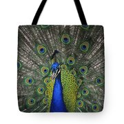 Peacock In Open Feathers, Victoria, Bc Tote Bag