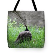 Peacock In The Grass Tote Bag