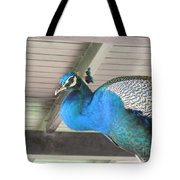 Peacock In The Rafters Tote Bag