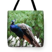 Peacock On A Rock 1 Tote Bag