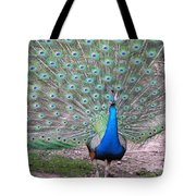 Peacock On Display Tote Bag