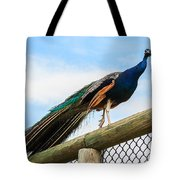 Peacock On Fence 1 Tote Bag