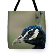 Peacock Profile  Tote Bag