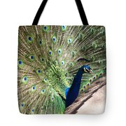 Peacock Show Tote Bag